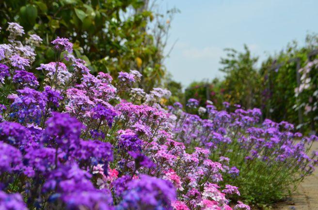 120526004 kana garden.jpg