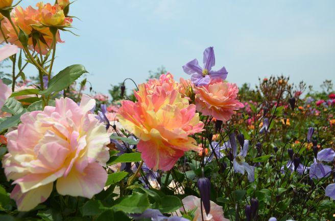 120526007 kana garden.jpg