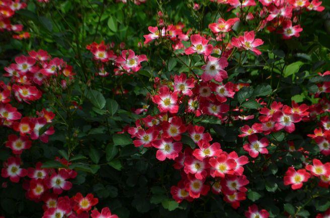 120526009 kana garden.jpg