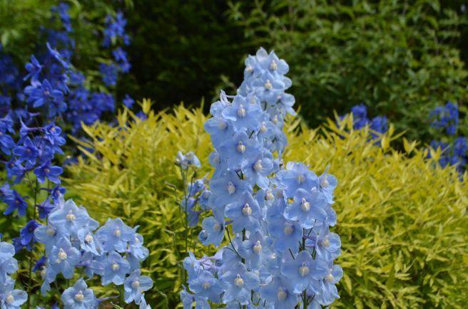 120526010 kana garden.jpg