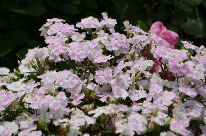 120526012 kana garden.jpg