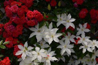 120526202 kana garden.jpg