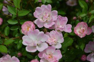 120526208 kana garden.jpg