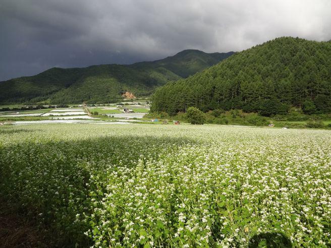 120819120 kawakami mura.jpg