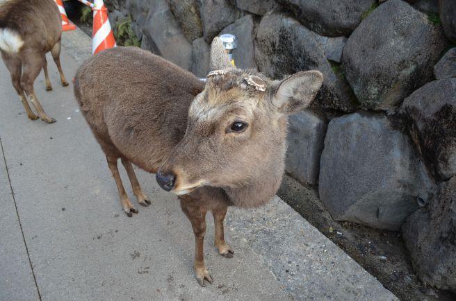 140210 3301W wakakusayama.jpg