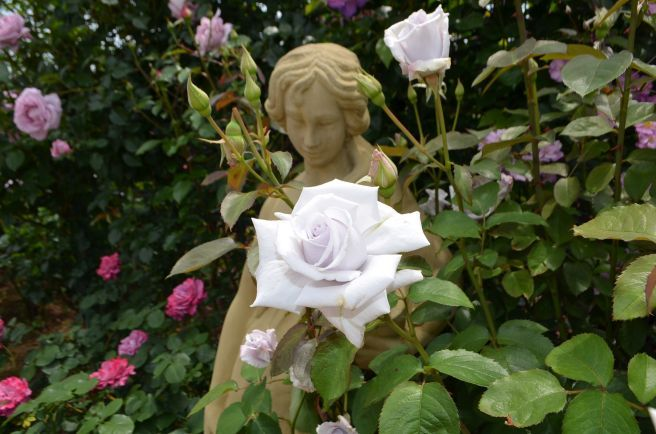 120526011 kana garden.jpg