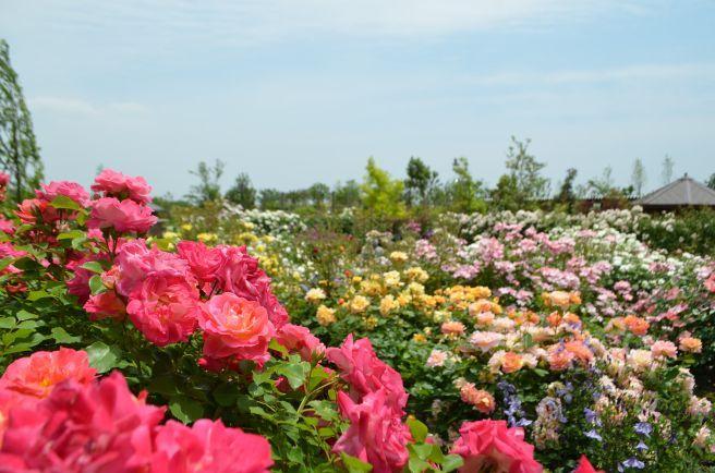 120526014 kana garden.jpg