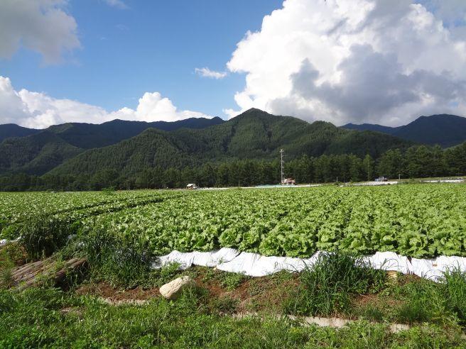 120819116 kawakami mura.jpg