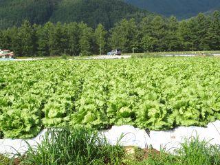 120819118 kawakami mura.jpg