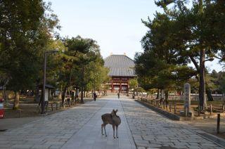 140210 3105S todaiji temple.jpg